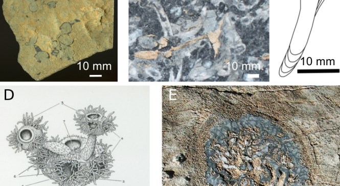 Patterns in Palaeontology — The earliest skeletons