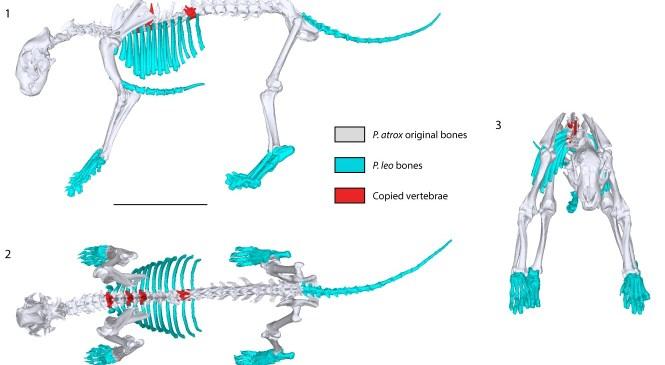 Fossil Focus: Reimagining fossil cats