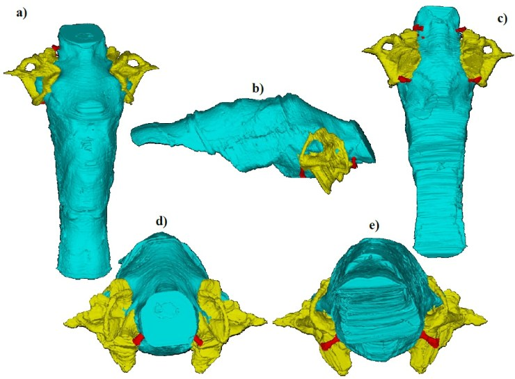 Figure 2 - Thrinaxodon brain reconstruction