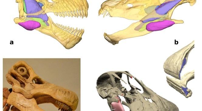 Fossil Focus: Sauropodomorpha