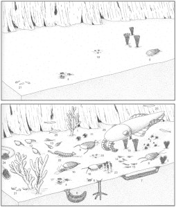 Figure 3 — Potential 'megabias' in the fossil record when soft-bodied animals are not preserved. Top: Reconstruction of the Cambrian Burgess Shale deposit as it would look if only biomineralized (shelly) animals were fossilized, and not soft-bodied ones. Bottom: Reconstruction of the Burgess Shale as it may have actually appeared in life (i.e. with soft-bodied animals). Note that live–dead agreement is almost always higher when soft-bodied animals are fossilized. Both images from Fossils of the Burgess Shale, edited by Derek E.G. Briggs, Douglas H. Erwin, Frederick J. Collier and Chip Clark (1995).