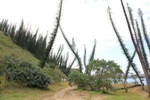 Figure 6 - Fieldwork in New Caledonia. Credit: L. Seyfullah.