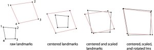 Figure 7 — Diagram representing the different stages in a Procrustes superimposition of two sets of landmarks. Source: Mitteroecker, P. & Gunz, P. 2009. Advances in geometric morphometrics. Evolutionary Biology 36, 235–247. doi:10.1007/s11692-009-9055-x