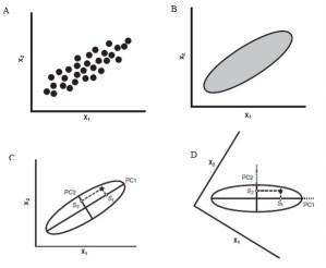 Figure 8 — A simplified graphical representation of what PCA does to data. Rearranged from: Zelditch, M. L., Swiderski, D. L., Sheets, H. D. & Fink, W. L. 2004. Geometric morphometrics for biologists: a primer. 95:443. Elsevier Academic Press.