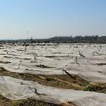 """Mazzarano: """"Misure speciali per rimediare ad almeno due anni di mancata produzione agricola"""""""