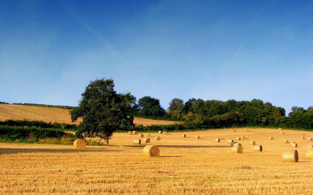 """La """"banca delle terre agricole"""": nata per acquisire terreni di pubblica proprietà"""