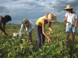I bandi PSR un nuovo futuro per le imprese agricole