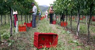 Diritto al contributo sulle spese sostenute dalle imprese agricole per sottoporre i lavoratori a visita medica preventiva