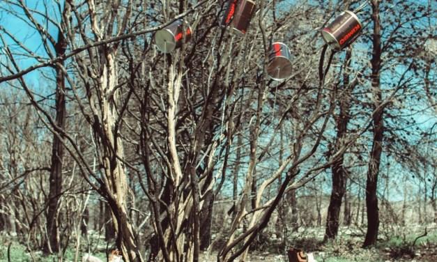 Rami sopravvissuti all'incendio dell'estate scorsadiventano un'arpa eolica, nel parco naturale, grazie al progetto Semina