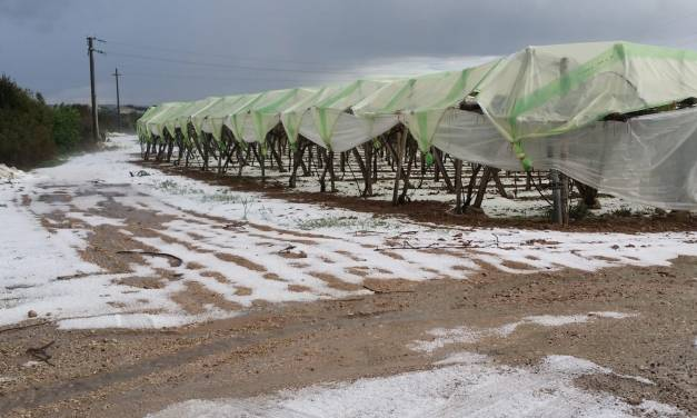 Emergenza maltempo, CIA Puglia: alberi da frutto in fiore a rischio