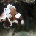 cute sweetlip fish in Palawan's waters