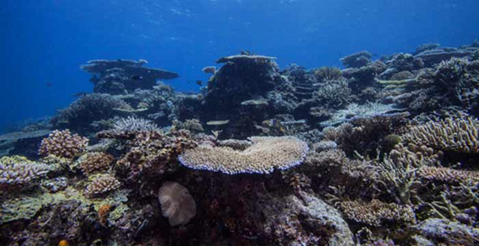 Coral reefs in Philippines