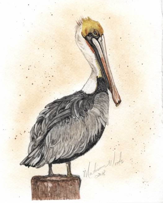 For this pelican, I did have to resort to a couple of outside colors, although they were still my own handmade watercolors. I used lapis for the blue in his eye and French green clay to give the gray the right tint. This painting was based on a photo fromU.S. Fish and Wildlife Service.