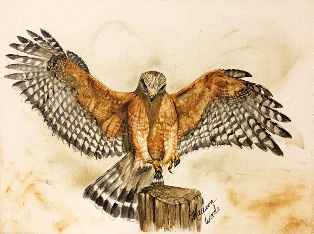Red-shouldered hawk painting in Ozark pigments by Madison Woods