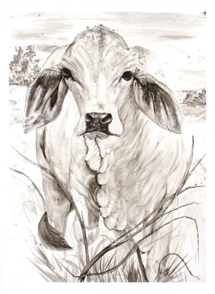 Whisper, a brahman cow in bone pigment grayscale.