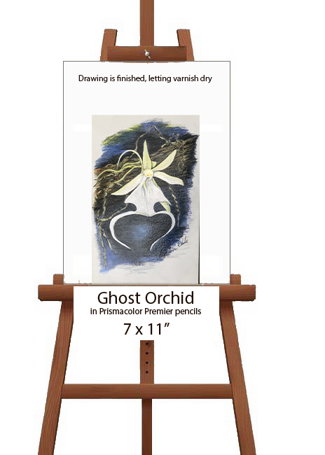 Ghost orchid on the easel