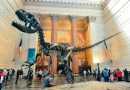 AMNH | Invertebrate Paleontology Summer Internship