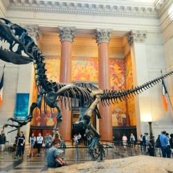 AMNH | Invertebrate Paleontology Summer Internship