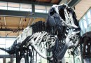 On the News   Transformed Witte Museum opens this weekend: 'People will be blown away' @ San Antonio Express-News