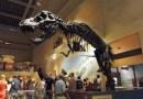 Paleontological Training Program @ The Smithsonian