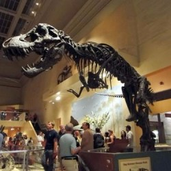 Paleontological Training Program @ The Smithsonian