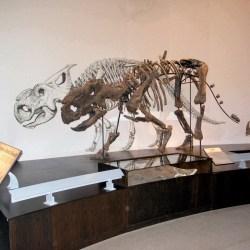 Alberta, Canada | Palaeontology Technician Summer Student