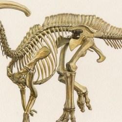 AAA | Vertebrate Paleontology Mini-Meeting