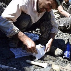 "On the News | ""About the size of a cow"" New prehistoric sea creature discovered after Montana hunter finds exposed fossils @ Montana Standard"