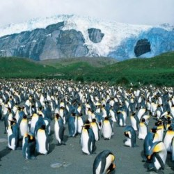 On the News | Antarctica was once green @Nerve.in