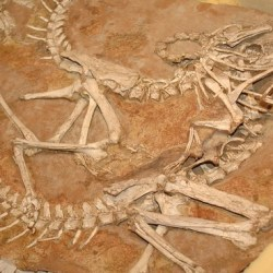 On the News | Korea returns smuggled dinosaur fossils to Mongolia @ The Korea Times