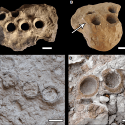 Just out | A new interpretation and palaeoecological significance of the fossil bee cell cluster Rosellichnus patagonicus (Celliformidae) @ Papers in Palaeontology
