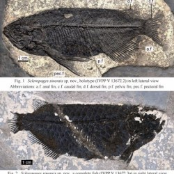 On the News | Fossils of world's most pricey pet fish discovered @ Ecns.cn