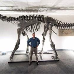 On the News | Meet Moabosaurus, Utah's latest dino discovery @ The Salt Lake Tribune