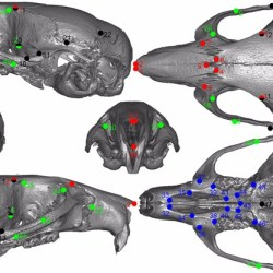 Course | 3D Geometric Morphometrics | 20% off for Paleowire Readers