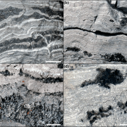 Just out | Proterozoic microbial mats and their constraints on environments of silicification @ Geobiology