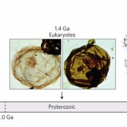 Just out | Fossil eukaryotes: Fungal origins? @ Nature Ecology & Evolution