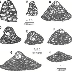 Just out | Early Barremian orbitolinid record from the Moghan area, NW Iran: Northern margin of the Neotethys @ Cretaceous Research