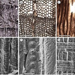 Just out | Conifer fossil woods from the Santa Marta Formation (Upper Cretaceous), Brandy Bay, James Ross Island, Antarctica @ Cretaceous Research