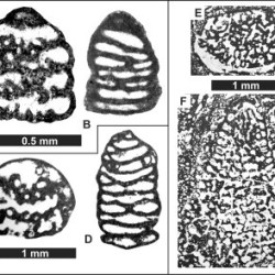 Just out | Cantabriconus reocinianus n. gen., n. sp. a new conical agglutinating benthic foraminifera from the upper Aptian-lower Albian of Cantabria, N-Spain @ Cretaceous Research