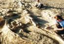 On the News | Chile | Más de 9.000 fósiles y piezas arqueológicas ha incautado la PDI en los últimos cuatro años @ La Tercera