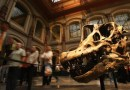 On the News | New Analysis Finds the Fossils In France To Be The Earliest Relative Of Brachiosaurs @ The Science Times