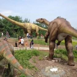 Job Offer | Dinosaur Park Program Coordinator