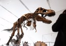 On the News | USA | How T. rex's powerful bite crushed dino bones to a pulp @ The Washington Post