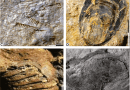 Just out | An integrative ichnological and taphonomic approach in a transgressive–regressive cycle: a case study from Devonian of Paraná Basin, Brazil @ Lethaia