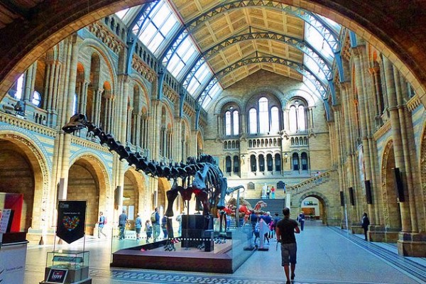 Job | Researcher in Palaeo Reptiles | Natural History Museum, London