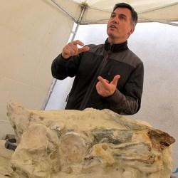 On the News | France | Le fossile exceptionnel d'un prédateur marin découvert en Anjou @ angers.fr