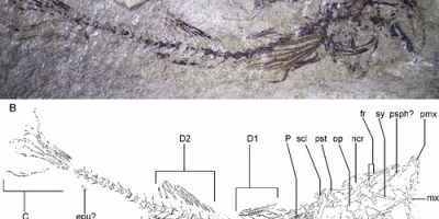 Just out | Discovery of the oldest Gobius (Teleostei, Gobiiformes) from a marine ecosystem of Early Miocene age @ Journal of Systematic Palaeontology