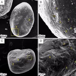 Just out | Preservation of titanosaur egg clutches in Upper Cretaceous cumulative palaeosols (Los Llanos Formation, La Rioja, Argentina) @Palaeogeography, Palaeoclimatology, Palaeoecology