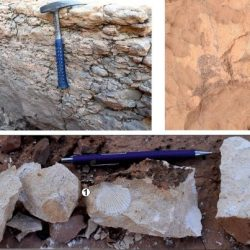 Just out | Litho- and biostratigraphy, facies patterns and depositional sequences of the Cenomanian-Turonian deposits in the Ksour Mountains (Saharan Atlas, Algeria) @Cretaceous Research