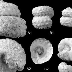 Just out | Cenomanian Turrilitidae (Cretaceous heteromorph ammonites) from the Koppeh Dagh, northeast Iran: Taxonomy and stratigraphic implications @ Cretaceous Research